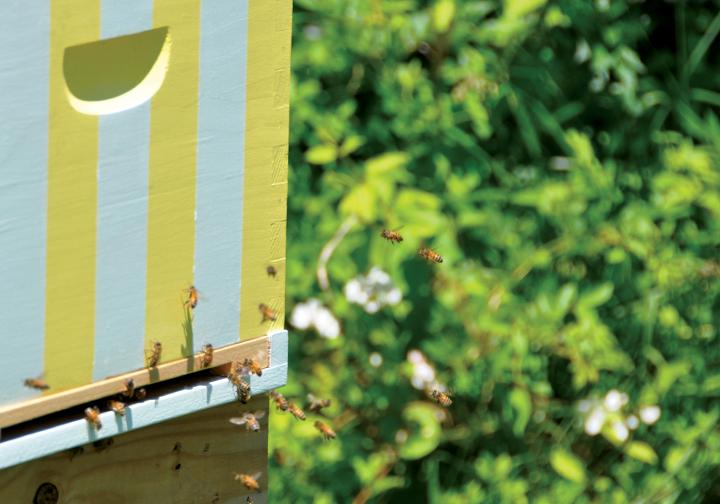 honeybees_1