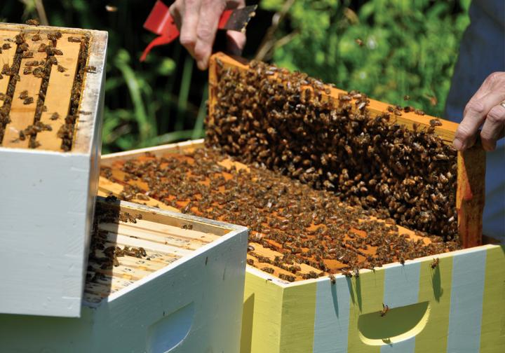 honeybees_3