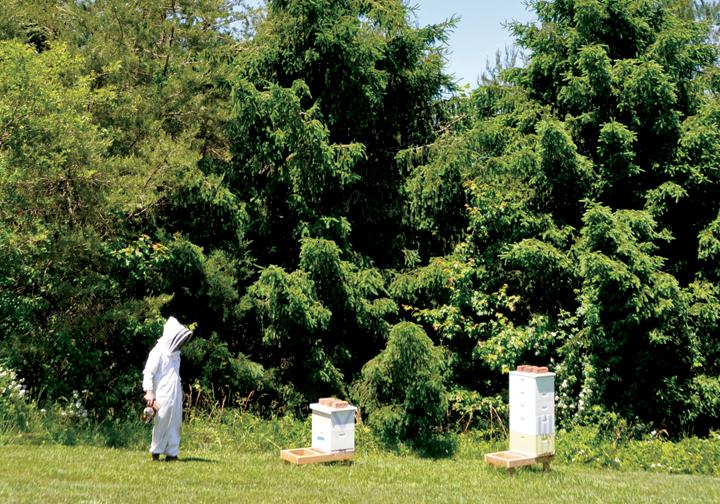 honeybees_4